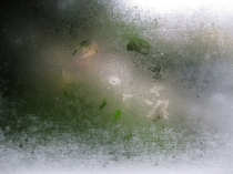 bee trace in condensation