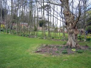 Tree row in Hadspen Garden Somerset