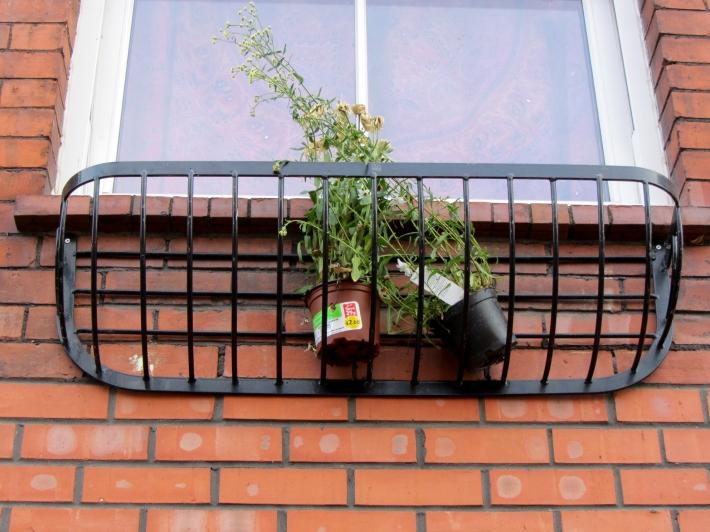sad plants in window box