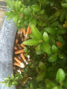 Cigarette butts in planter