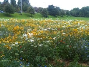 Meadow flowers Old Deer Park 1