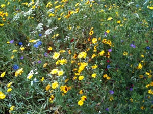 Meadow flowers in Old deer park 3