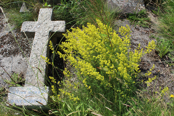 Ladies Bedstraw and Cross