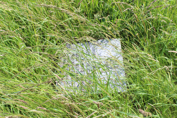 Memorial stone and grass