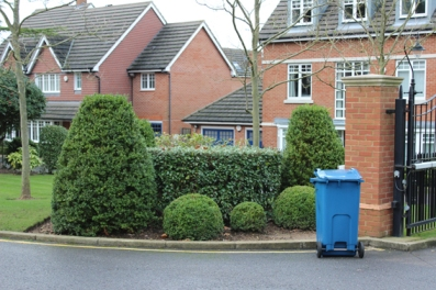 box hedges and bin