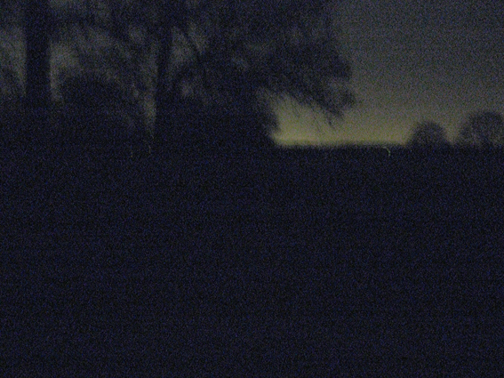 Richmond Park at night