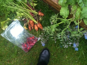 boot. carrot and raspberries, borage at the plot