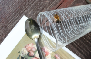 Bee honey and card