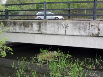 Coot nesting under the cars