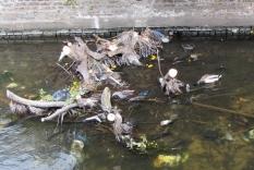 Nature and debris