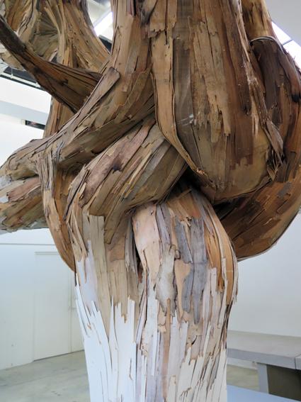 Baitogogo root