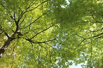 13. Trees overhead