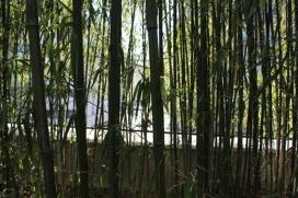 15. Bamboo