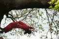 Calling Tree Simon Whitehead and Rosemary Lee