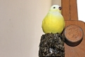 Sheila Ghelani A Place for Dreaming