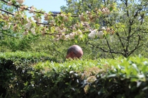 7. David's head in the hedge