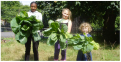 Home Live Art Harvest It