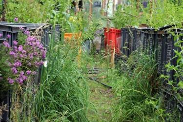Princezzinnen Garten path