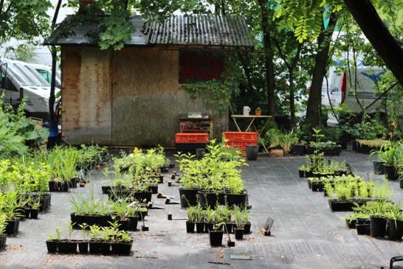 Princezzinnen Garten perenniel garden