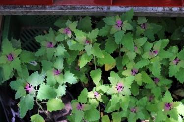 Princezzinnen Garten plants