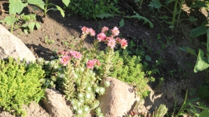 Rockery flowers Impossible Forest