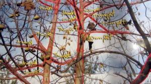 trumpet-empress-tree
