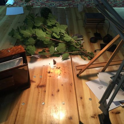 Sheila's pic of Common Salt foliage practice table