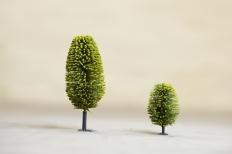 Two Trees Common Salt